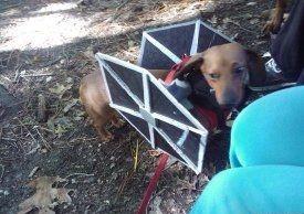 dogtiefightercostume