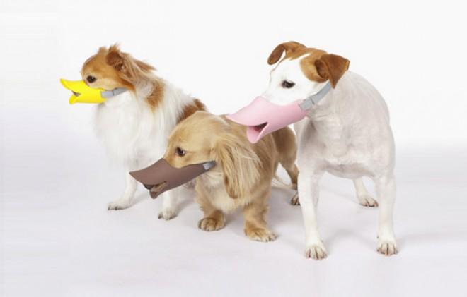 Entenmasken für Hunde