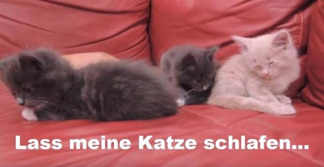 LassMeineKatzeSchlafen