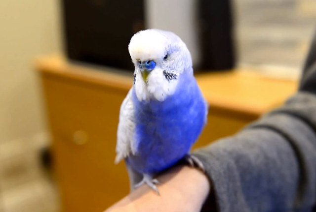 R2D2-Vogel