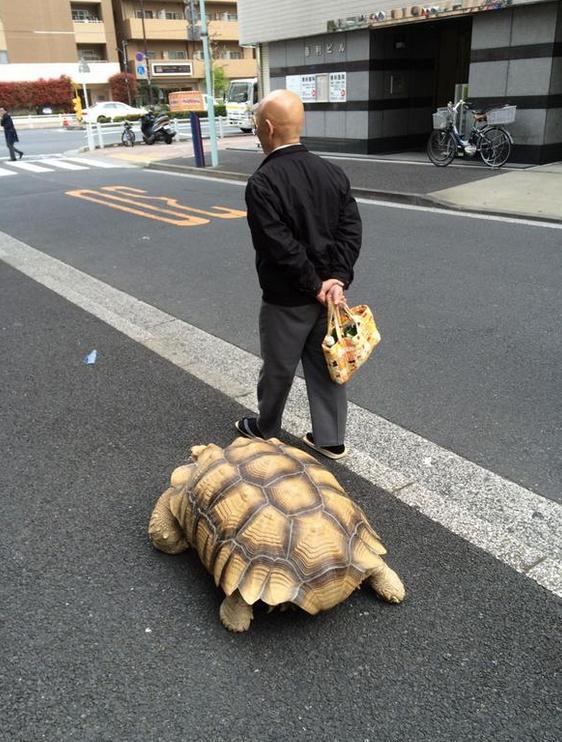 Schildkrötenspaziergang1