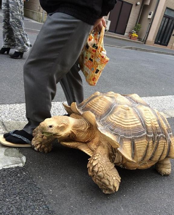 Schildkrötenspaziergang2