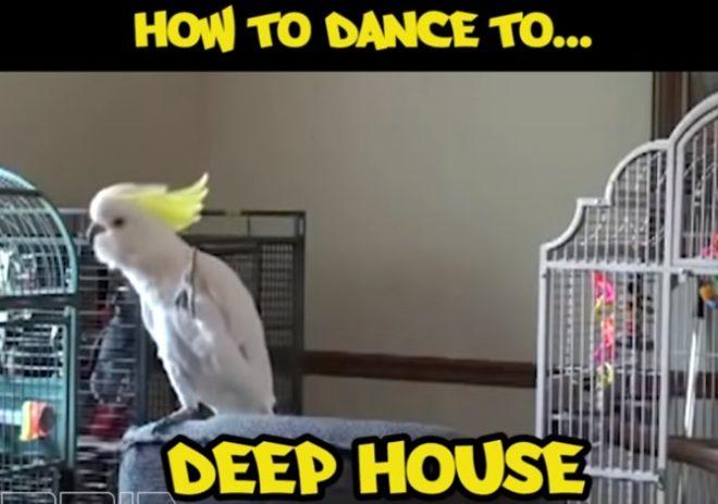 VögeleTanzrichtungen