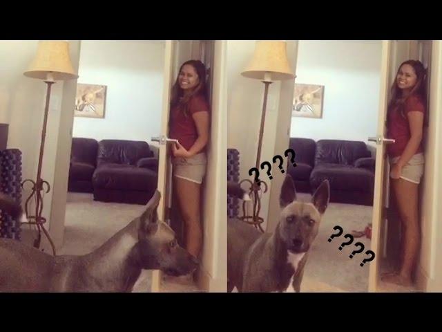 versteckisfailhund